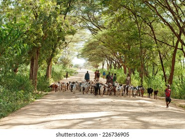 NORTH KENYA - JAN 05: Shepherd leading a flock of goats  on January 5, 2013 in North Kenya