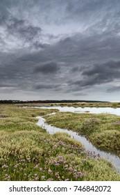 North Norfolk salt marshes in full bloom