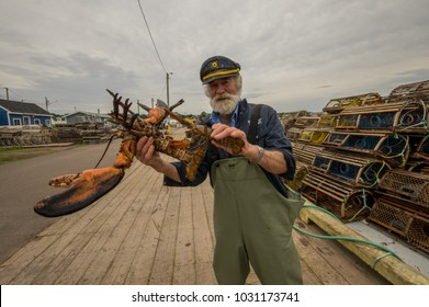 North Rustico, Prince Edward Island/Canada - 06-28-2017 : Beard fisherman caught a giant lobster