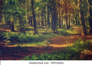 North scandinavian pine forest, Sweden natural travel outdoors vintage hipster background