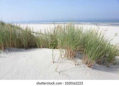 North Sea beach. Dune grass Ameland.