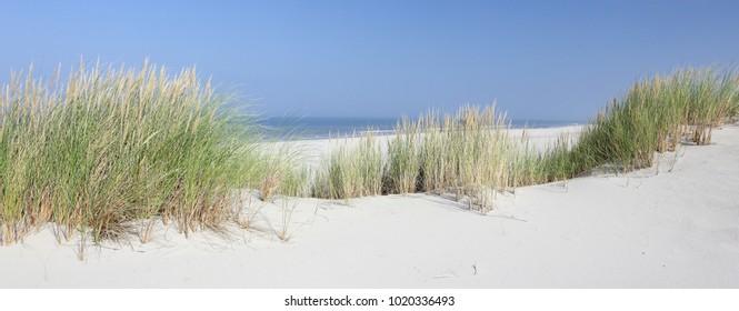 North sea beach. Dune grass of Ameland
