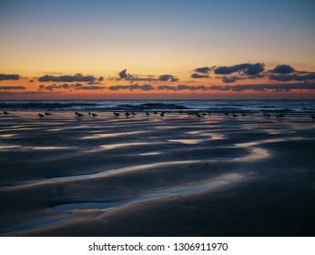North Sea at Blankenberge, Belgium: Traces of low tide during the summer sunset on the beach with walking seagulls
