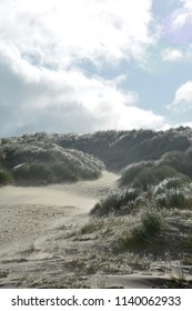 North Sea: Dunes on a windy day. The picture was taken on Vlieland, a small Dutch island in the North Sea.