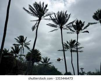 North Shore, Oahu, Hawaii - March 1, 2018: Exact replica of Magnum, P.I.'s Chopper flies out of Paradise Helicopters among coconut trees.