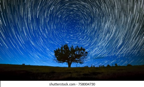 North Star Centered Above Juniper Tree Night Sky Star Trails Over Oregon