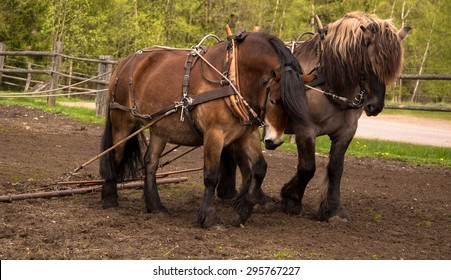Draft Horse Images, Stock Photos & Vectors | Shutterstock