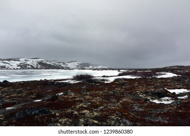 north tundra landscape