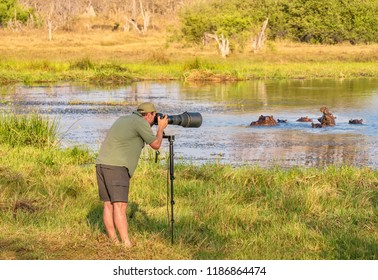 Northern Botswana - September 25, 2014. A male wildlife photographer, using a telephoto lens and a monopod, takes photos of a group of semi-submerged hippo in a small lake.