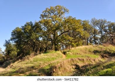 Northern California Recreation and Wildlife Refuge on Sacramento River