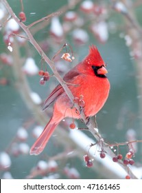 Northern cardinal perched on a branch during light winter snow