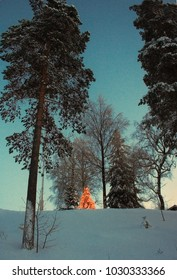 Northern countryside view before sunset with christmas tree. Resorts region