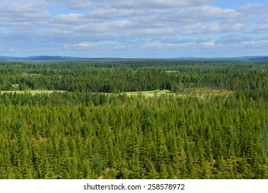 Northern endless forests. Finland, Lapland