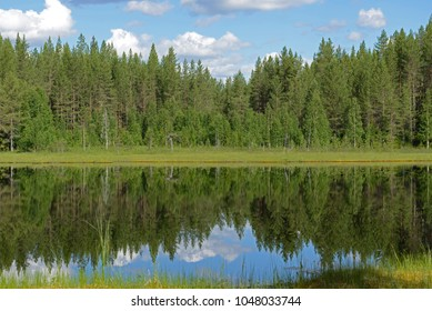 Northern Forest Lake in Finnish Lapland. Summer Landscape
