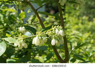 Huckleberry Images Stock Photos Amp Vectors Shutterstock