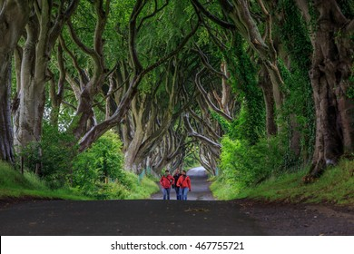 Northern Ireland, UK - July 4, 2014 : People are spending their holiday visiting the Dark Hedge, country road planted with beech tree since 18th century.
