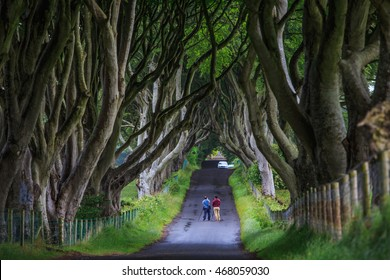 Northern Ireland, UK - July 4, 2014 :  Photographers are taking pictures at the Dark Hedge, the romantic, atmospheric, tunnel-like avenue of intertwined beech trees, planted in the 18th-century.