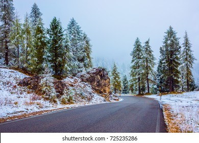 Northern Italy. Fir forest covered with first snow in the Dolomites. Wet road to the pass Giau
