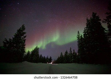 Northern light dancing in the sky over pine forest along the road