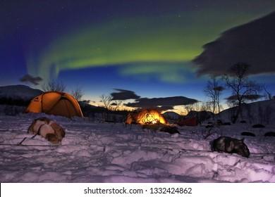 Northern light during dog sledding expedition