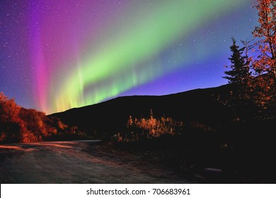 northern lights appear in cloudless, starry night sky over moose creek and park road in denali national park, alaska