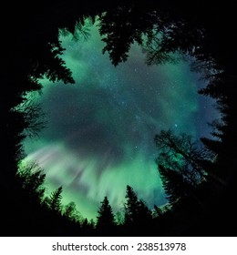 Northern lights (Aurora Borealis) above a forest fisheye