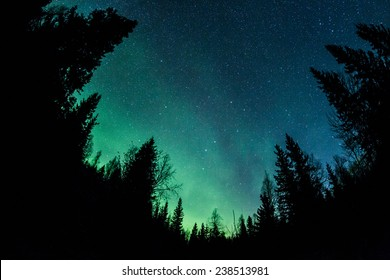 Northern lights (Aurora Borealis) above a forest