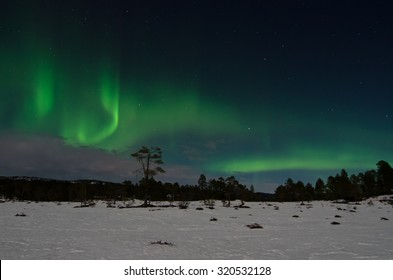 Northern lights (aurora borealis) over a snow covered marsh