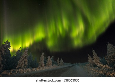 Northern Lights - Aurora borealis over snow-covered forest. Beautiful picture of massive multicoloured green vibrant Aurora Borealis, Aurora Polaris, also know as Northern Lights in the night sky