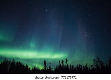 The Northern Lights dance in the night sky above a silhouette of trees in a boreal forest in Alaska.