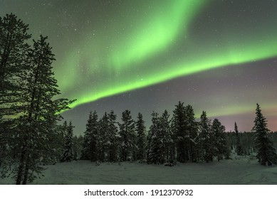 Northern Lights in Finland over a pine forest