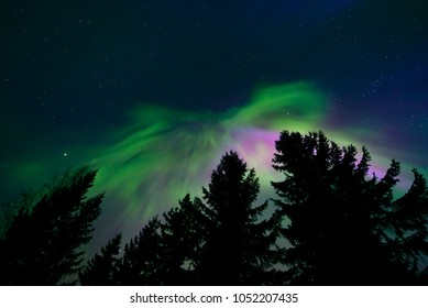 Northern lights in the night sky and trees