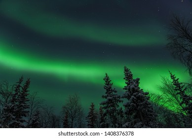 Northern Lights In the Wood, In Naryan-Mar, Nenets Autonomous Area, Russia.