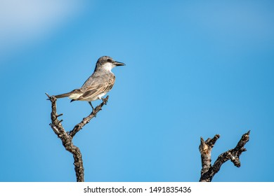 Florida State Bird Images, Stock Photos & Vectors   Shutterstock