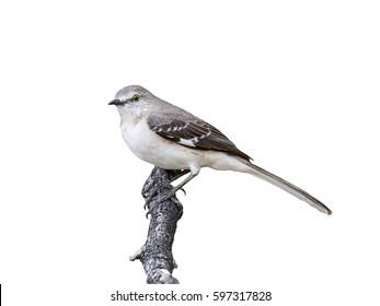 mockingbird dansk