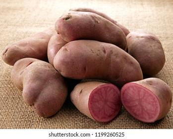 Northern ruby (New varieties of japanese potatoes)