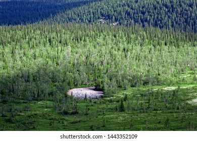 Northern Scandinavian mountain tundra and forest, boreal forest on plateaus (fjel), riverine area. Dominate Norway fir (Pinus friesiana, P. lapponica). Glaciated landscape