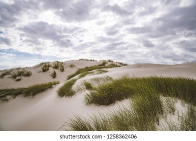 Northern sea dunes with sea grass covered in Amrum Germany.
