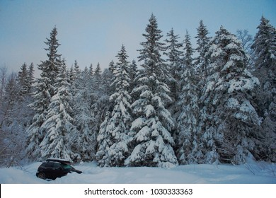 Northern snowy  view against tree wall . Norway region.