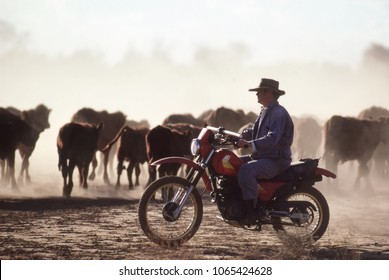 Northern Territory,Australia-June 16, 1990. Stockman on a motor bike mustering cattle on an outback cattle station in the Northern Territory, Australia