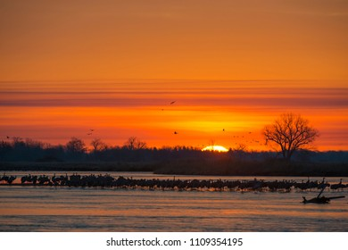 Northward Sandhill Crane migration through Nebraska
