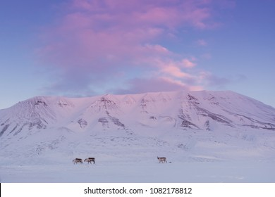 norway landscape nature of the mountain  of Spitsbergen Longyearbyen  Svalbard   arctic winter  polar reindeer sunset sky