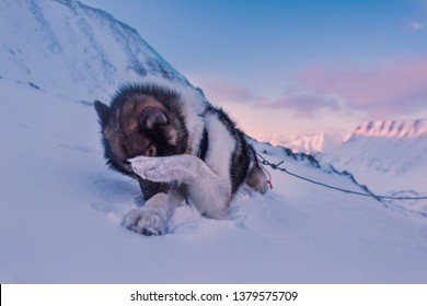 norway landscape nature of the mountains of Spitsbergen Longyearbyen  Svalbard   arctic ocean winter  polar day sunset sky hiking with husky