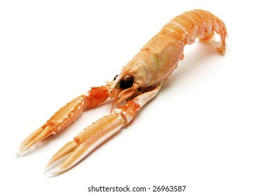 Norway lobster (Nephrops norvegicus) on a white background