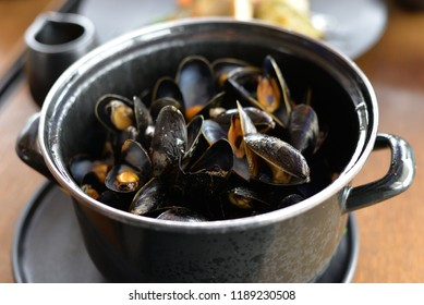 Norwegian Blue Mussels