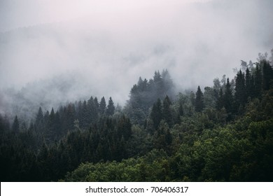 Norwegian evergreen mountain forest with fog