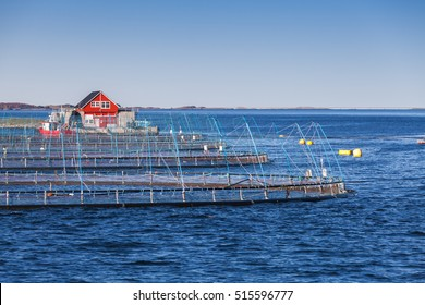 Norwegian fish farm for salmon growing. Sea fjord in Trondheim region