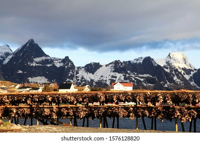 Norwegian fish that are dried on bamboo on blurred mountain background,Cod stockfish.Industrial fishing in Norway