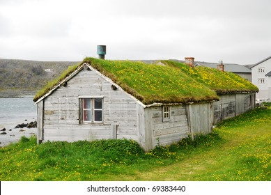 Norwegian fishing village is photographed in summer. There are two small houses or huts with green-roofs. Yellow dandelions are flowering in the green grass everywhere.