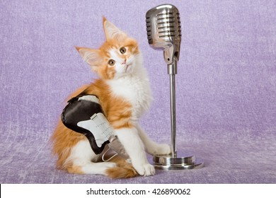 Norwegian Forest Cat kitten wearing toy black and white guitar with imitation fake vintage microphone on stand on lilac light purple background